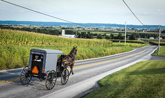 Sunday in Lancaster (six28fifty) Tags: amish lancaster buggy amishhorseandbuggy pennsylvania farmland rural
