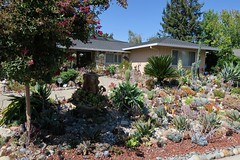 A hobby that took over? (jinxmcc) Tags: cactus succulents garden obsession droughttolerant contracostacounty northerncalifornia