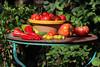 CKuchem-5599 (christine_kuchem) Tags: bauerngarten biogarten bioqualität ernte erntezeit fleischtomate garten gemüse gemüsegarten grün gurke nutzgarten paprika peperoni pflanze rarität sommer sorte sorten sortenvielfalt tomate vielfalt zucchini bio biologisch frisch gelb gesund lecker natürlich orange reif rot selten unbehandelt