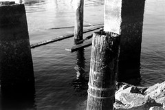 Pilings and Debris (bac1967) Tags: ilford panf film 35mm 135 35mmfilm ilfordpanfplus50 panf50plus panf50 blackandwhite blackandwhitefilm blackwhite bw monochrome monotone beerenol beerol beer beerfilmdeveloper caffenol portorchardwa marina sinclairinlet sinclair pugetsound pnw pacificnorthwest washingtonstate washington wa kingregulacitaiii king regula cita iii rangefindercamera rangefinder steinheilmunchencassar steinheil munchen cassar steinheilmunchen gossenlightmeter gossen piling concrete debris wood rot decay abandoned crusty rusty