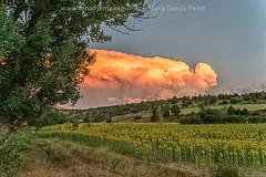 Nubes de tormenta (2) (fotochemaorg) Tags: agricultura airelibre amarillo campo escenarural girasoles luzdelsol nube paisaje cielo hierba naturaleza puestadelsol verano árbol