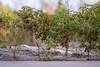 little treeline (severalsnakes) Tags: kansas pentax rokinon8514 saraspaedy shawnee shawneemissionpark k1 manualfocus