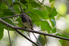 (mak_9000) Tags: tropical woodland