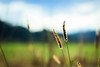 Bokeh nature (Sirena Lu) Tags: autumn bokeh nature morning cooling cool pondering mood atmosphere plants green yellow mountain landscape dof closeup puch villach carinthia