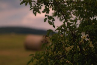 im Juni - Domiplan f=50mm 1:2.8 automatic lens