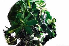 Save The Planet (the nenuco 123) Tags: verde green nikon d5300 save planet valencia españa spain cambio clmático silueta contraluz doble exposicion