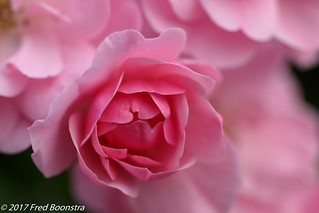 In the garden,