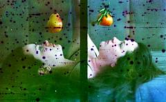 Fruits - Frutas (terencekeller) Tags: olympus pen eed fujicolor superia xtra 35mm 30mm filmsoup sopadefilme sopa soup film filme lemonjuice epson v370 terence keller analógico 400 fruits half frame halfframe meioquadro díptico