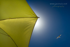 Summer time (javiruiz) Tags: verano sombrilla gaviota pajaro playa vacaciones summer islacanela huelva gx7 ayamonte
