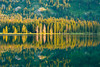 Rhythm of morning (huang.bolun) Tags: grandtetonnationalpark morning sunrise light lake trees tree reflection water grandteton