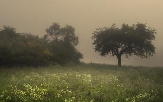 Fog Meadows