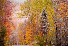 Autumn is Almost Here (T P Mann Photography) Tags: greatphotographers road trees rural painting cold red orange snow breezeway colors color fall autumn