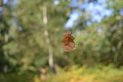 #71 - Floating (OLJOAT) Tags: leaf float levitate