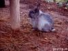 12 (Protty coniglio nano) Tags: coniglio conigli protty bunny bunnies rabbit rabbits kaninchen lapin coniglietti coniglionano prottyit coniglinani oryctolagus oryctolaguscuniculus