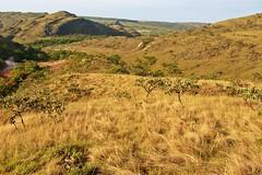 Serra da canastra (Conexão Selvagem) Tags: observaçãodeaves serra canastra parque nacional cerrado aves bird wildlife galito rapina gavião