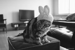 _DSC2333 (catfish.boogie) Tags: nikond750 tamronsp35mmf18divcusd japan hokkaido cat