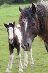 The foals (themadbirdlady) Tags: horse pony springkerse domesticanimal