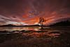 Fiery Soul (lfeng1014) Tags: fierysoul wanakatree wanaka lakewanaka southisland newzealand nz sunrise landscape longexposure 30seconds canon5dmarkiii ef1635mmf28liiusm travel lifeng
