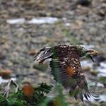 Fly Like An Eagle thumbnail