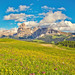 Alpe di Siusi (Nature Photography (miraclellie)) Tags: langkofel mount monte north northern italy flower yellow
