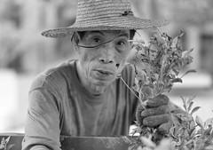 At Work #9 (ROSS HONG KONG) Tags: plant plants gardening gardener hk bankofchina boc central queensroadcentral black white blackandwhite bw monochrome noir blanc hat leica m8