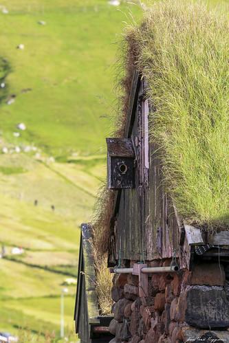 Le nichoir, Elduvik