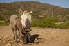 vacanze sarde_-66 (Trittonando) Tags: asinara sardegna sardinha asinello bianco carcere