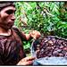 Brazil nut harvester