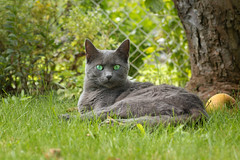 Im Garten (explored) (Jana`s pics) Tags: katze cat katzenaugen cateye grey grau garten garden wiese outdoor drausen greeneyes grüneaugen entspannen chillout relax fell fellnase lieblingsmodel