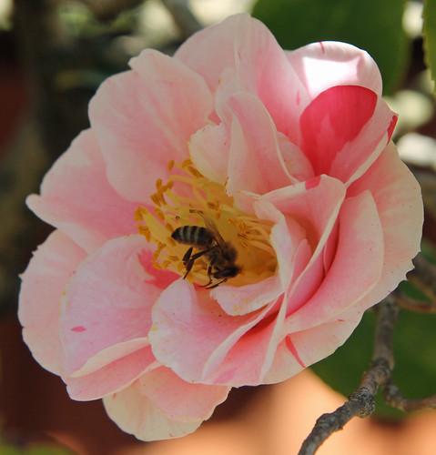 Auburn Botanical Garden