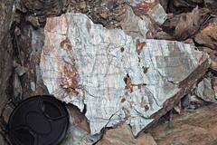 Metcalf Phyllite (Neoproterozoic; Laurel Creek Road outcrop, Great Smoky Mountains, Tennessee, USA) 5 (James St. John) Tags: metcalf phyllite phyllites metamorphic rock rocks metamorphics snowbird group ocoee supergroup precambrian proterozoic neoproterozoic laurel creek road great smoky mountains national park appalachians appalachian tennessee