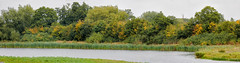 Marsh Lane Reserve 3rd September 2017 (boddle (Steve Hart)) Tags: hamptoninarden england unitedkingdom gb 100400mm is usm ii wild wilds wildlife life nature natural bird birds flowers flower fungii fungus insect insects spiders butterfly moth butterflies moths creepy crawley winter spring summer autumn seasons sunset weather sun sky cloud clouds panoramic 360