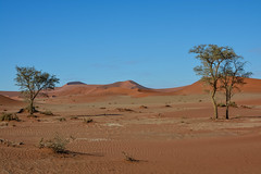 (mdiec) Tags: namibia africa landscape mountains hills sossusvlei desert dunes namib sand sunrise sky trees
