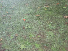 UW110040.jpg (jramspott) Tags: georgia storm river nature water chattahoochee atlanta rain tropicalstorm irma unitedstates us
