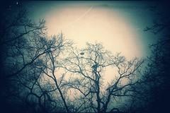the dreamcatcher (***étoile filante***) Tags: stern sternschnuppe stars trees bäume bird vogel nature natur wish wunsch emotions emotional soulful creative dark dunkel bright hell light licht dream traum dreamy dreamcatcher