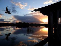 The beauty of a lake... (antonè) Tags: lago platamona sassari riflessi tramonto cielo nuvole acqua capanno sardegna antonè