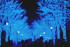 Blue - 2016 (Shoji Kawabata. a.k.a. strange_ojisan) Tags: nikon fm2 lomography x zenit new petzval lens cn 400 35mm film filmphoto filmphotography lomo analog analogphoto analogphotography photo phootography bokeh analogcamera camera filmcamera 2016 japan streetphoto streetphotography night nightphoto nightphotography blue bluenight light lights bluelight yoyoghi park yoyoghipark yoyogipark