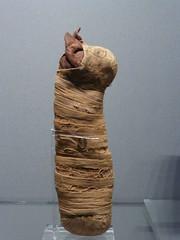Fitzwilliam Museum, Cambridge (carolyngifford) Tags: fitzwilliammuseum cambridge ancientegypt mummifiedcat