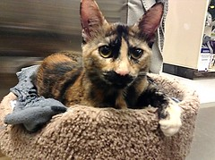 Groucho - 5 month old spayed female