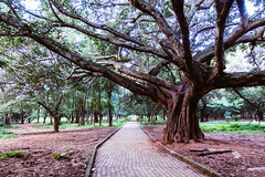 Cubbon Park (Mark Griffith) Tags: amazon amazoncom bangalore india sonyrx100v work cubbonpark 20170918dsc00152