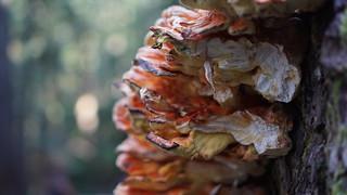 Fungi! Fungi! Fungi!