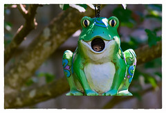 A Bird in the Frog... (Timothy Valentine) Tags: clichésaturday 0717 birdhouse bird frog home 2017