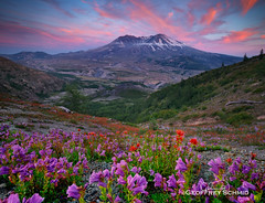 Penstemon and Paintbrush Tapestry, St. Helens at Sunset (GeoffSchmid) Tags: volcano crater wildflowers historical geology tourism