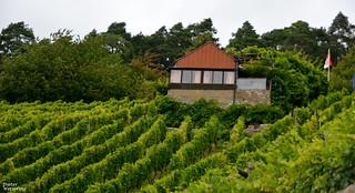 Die Winzerhütte in den Weinbergen
