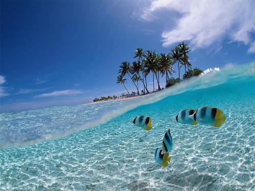 Pemandangan Laut Wallpaper A Photo On Flickriver