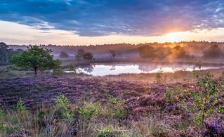 Sunrise @ Het Bergerbos - Afferden, Netherlands [Explored 4-9-2017]