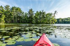 Kayak on Lake with lily pads (Craig - S) Tags: ludington ludingtonstatepark michigan midwest scenic tourism travel kayak red lilypads pond lake water lostlake hamlinlake inlet outdoors nature beautyinnature recreation kayaking