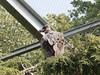 Monniksgier (ericderedelijkheid) Tags: ouwehandsdierenpark rhenen dierentuin zoo netherlands