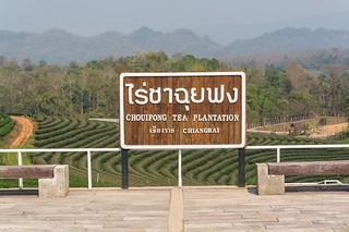 mae fah luang - thailande 25