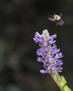 Bore Bee in-flight